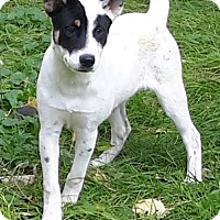 Adopt A Pet :: Mary - Minneapolis, MN