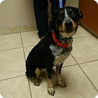 Adopt A Pet :: Maxi - Huntley, IL
