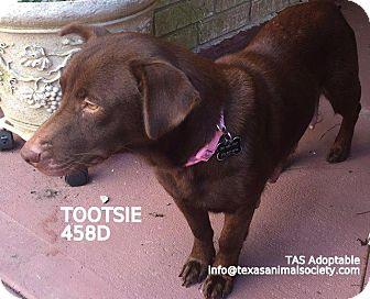 Corgi/Terrier (Unknown Type, Small) Mix Dog for adoption in Spring, Texas - Tootsie