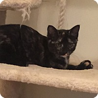 Adopt A Pet :: Angelique - New Albany, OH