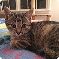Adopt A Pet :: Ramona - Breinigsville, PA