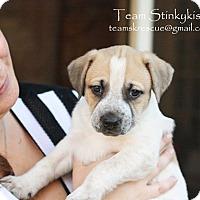 Adopt A Pet :: Londyn - Aiken, SC