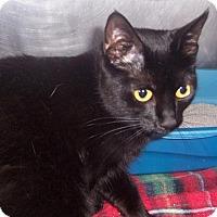 Adopt A Pet :: PANTHER - Fall River, MA