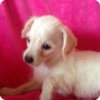 Adopt A Pet :: Heather - Carlsbad, CA