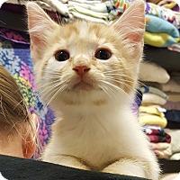 Adopt A Pet :: Sunshine - Lexington, KY