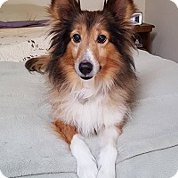 Adopt A Pet :: Harvey (Adoption Pending) - New Castle, PA