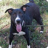 Adopt A Pet :: Francie - Livingston, TX