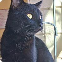 Adopt A Pet :: Waltz - Salisbury, MA