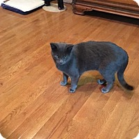 Adopt A Pet :: Grayson 3 - Bulverde, TX