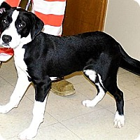 Adopt A Pet :: Zach - Washington Court House, OH