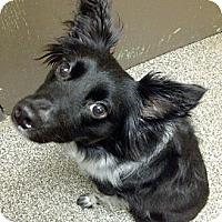 Adopt A Pet :: Oreo - Washington, IL