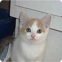 Adopt A Pet :: Admiral - Riverside, RI