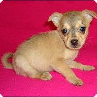 Adopt A Pet :: Gunner - Allentown, PA