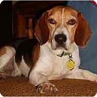 Adopt A Pet :: Sparky - Novi, MI