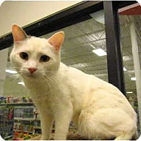 Adopt A Pet :: Cody - Warminster, PA