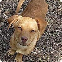 Adopt A Pet :: Dorado - Vista, CA