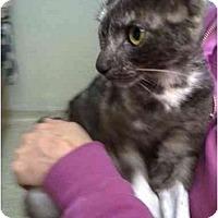 Adopt A Pet :: Siobhan - Irvine, CA