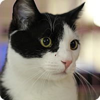 Adopt A Pet :: Ricky - North Branford, CT