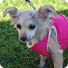 Adopt A Pet :: Pearl