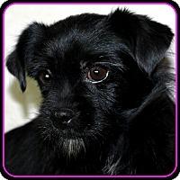 Adopt A Pet :: PENELOPE -ADOPTION PENDING - Seymour, MO
