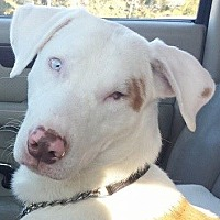 Shepherd (Unknown Type) Mix Dog for adoption in Lakeland, Florida - Chance