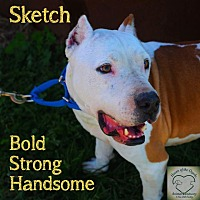 Pit Bull Terrier Mix Dog for adoption in Washburn, Missouri - Sketch