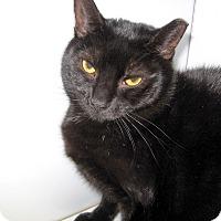 Adopt A Pet :: Marlon - Colmar, PA