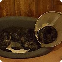 Adopt A Pet :: Blu - Hudson, WI