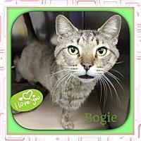 Adopt A Pet :: Bogie - Harrisburg, NC