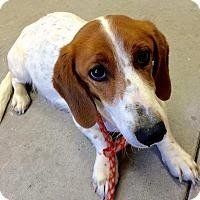 Adopt A Pet :: Gina - Sparta, NJ