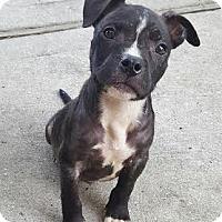 Adopt A Pet :: Loggerhead - Houston, TX