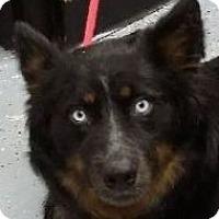 Adopt A Pet :: Ginger - Minerva, OH