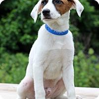Adopt A Pet :: Atticus - Waldorf, MD