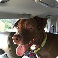 Adopt A Pet :: Pheobe - Colmar, PA