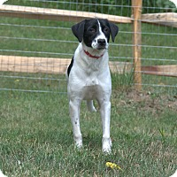 Adopt A Pet :: Daisy - Pottstown, PA
