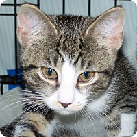 Adopt A Pet :: Mellie - Fort Wayne, IN