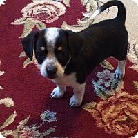 Adopt A Pet :: Dale - Brea, CA