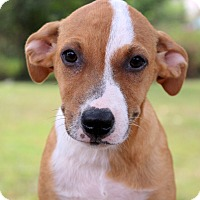 Adopt A Pet :: Martini~ meet me! - Glastonbury, CT