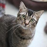 Adopt A Pet :: Monkey - Yukon, OK