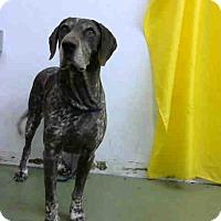 Adopt A Pet :: URGENT 10/27 @ DEVORE - San Bernardino, CA