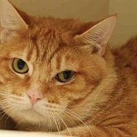 Adopt A Pet :: TRILLIUM - Pittsburgh, PA