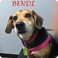 Adopt A Pet :: BENDI - Ventnor City, NJ