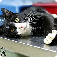 Adopt A Pet :: Jenkins - Marlinton, WV