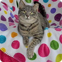 Adopt A Pet :: Misty the Magnificent - Taylor Mill, KY
