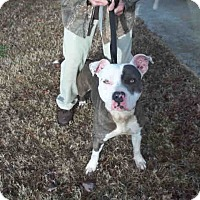 Adopt A Pet :: Mitch - Newnan City, GA