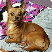 Adopt A Pet :: Humphrey and Loverboy - Lisbon, OH