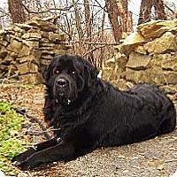 Adopt A Pet :: Max - Lee's Summit, MO