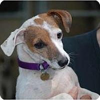 Adopt A Pet :: Jenny - Rhinebeck, NY