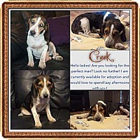 Adopt A Pet :: Creek - La Follette, TN