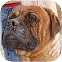Adopt A Pet :: Auggie - Phoenix, AZ